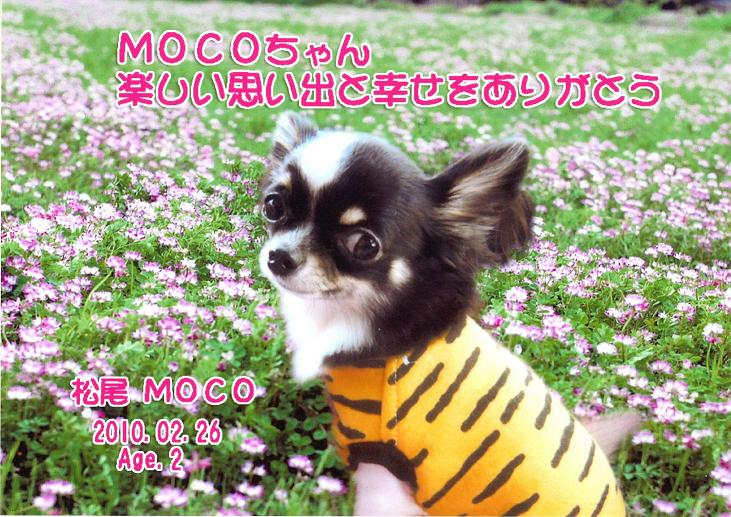 MOCO小.JPG