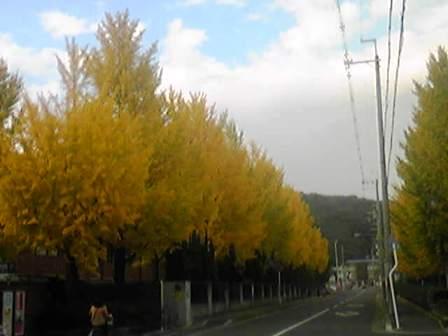 2012.11.09 autumn.jpg