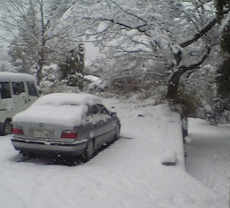 snow 16.jpg